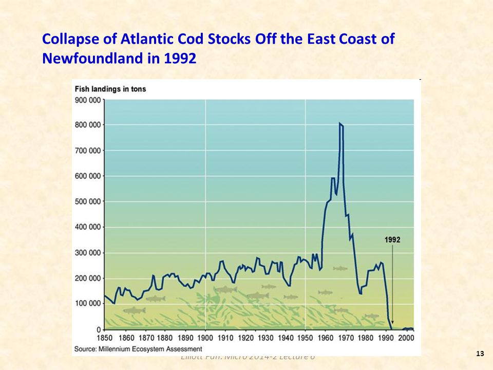 Collapse of Atlantic Cod Stocks Off the East Coast of Newfoundland in 1992