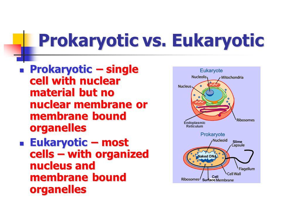 Prokaryotic vs. Eukaryotic