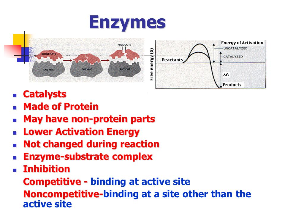 Enzymes Catalysts Made of Protein May have non-protein parts