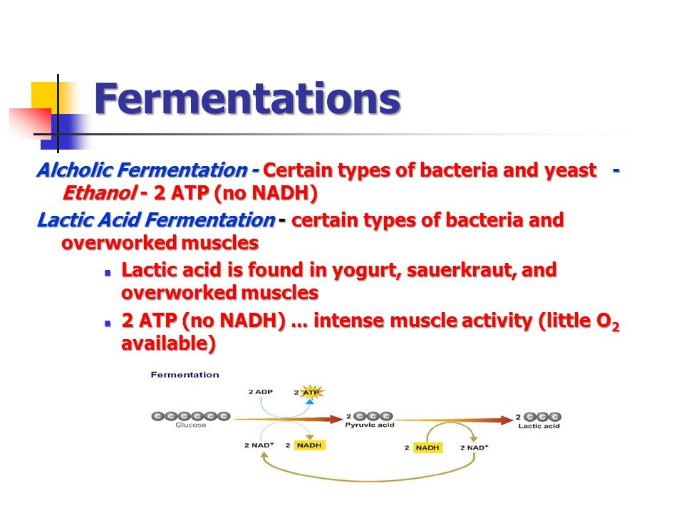 Fermentations Alcholic Fermentation - Certain types of bacteria and yeast - Ethanol - 2 ATP (no NADH)