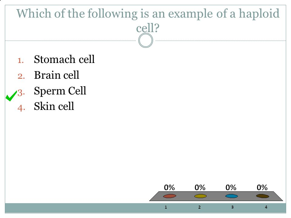 Which of the following is an example of a haploid cell