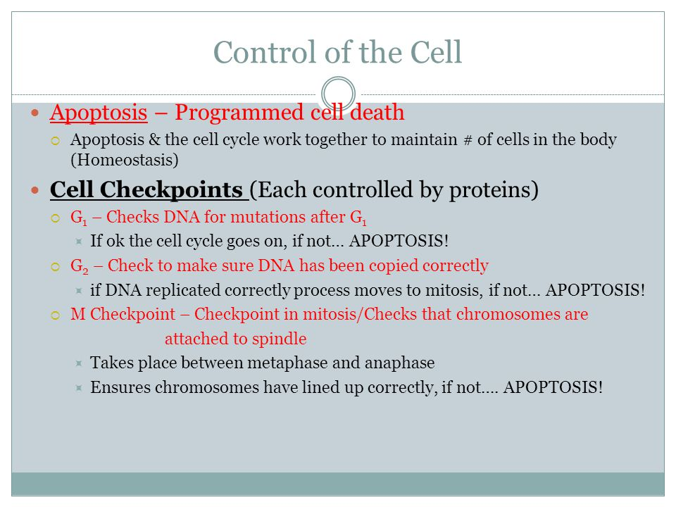 Control of the Cell Apoptosis – Programmed cell death