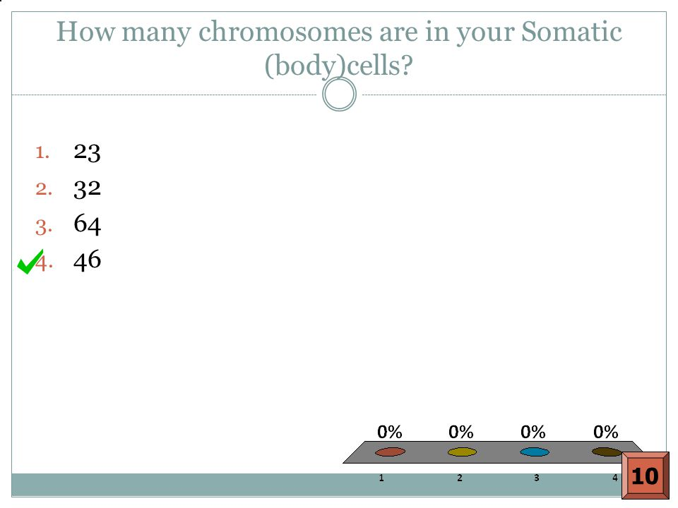 How many chromosomes are in your Somatic (body)cells