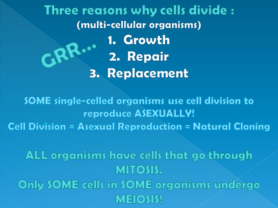 Three reasons why cells divide : (multi-cellular organisms) 1. Growth 2. Repair 3. Replacement