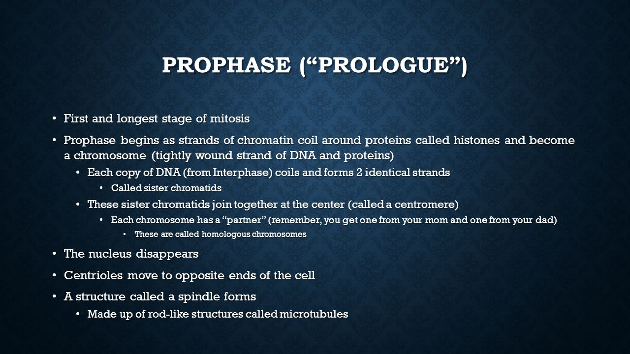 Prophase ( Prologue )