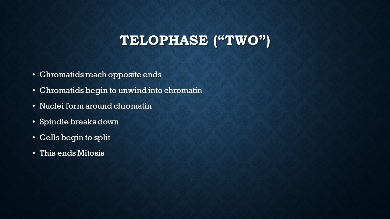 Telophase ( Two ) Chromatids reach opposite ends