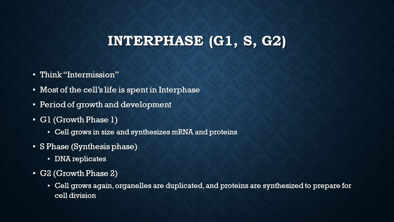 Interphase (G1, S, G2) Think Intermission