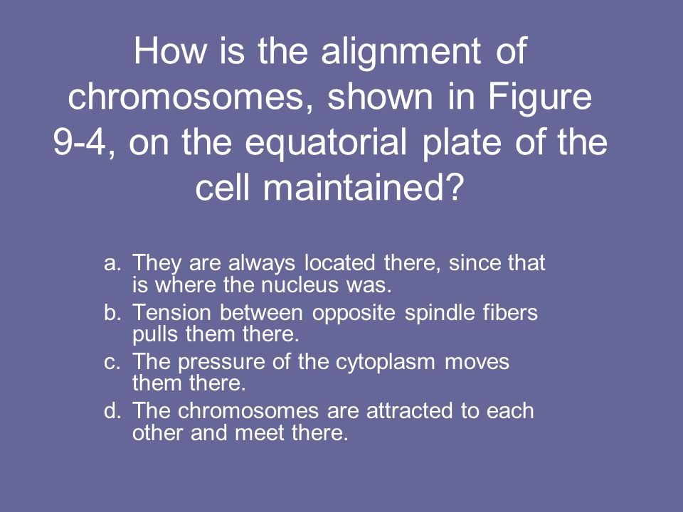 How is the alignment of chromosomes, shown in Figure 9-4, on the equatorial plate of the cell maintained