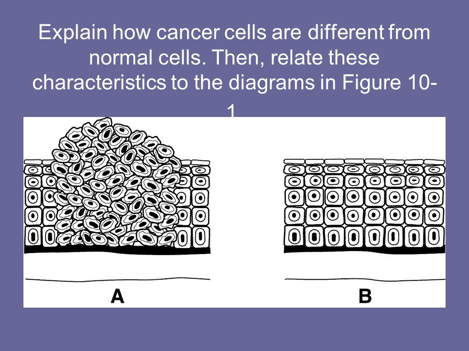 Explain how cancer cells are different from normal cells