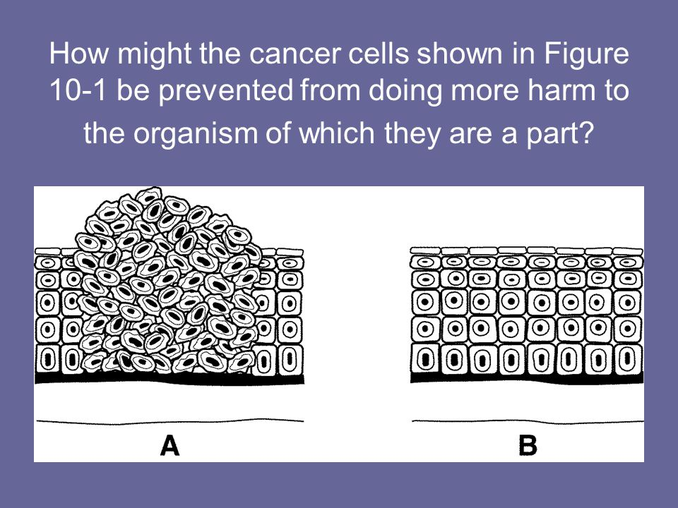 How might the cancer cells shown in Figure 10-1 be prevented from doing more harm to the organism of which they are a part