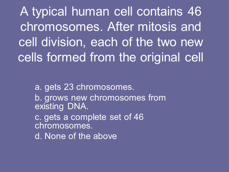 A typical human cell contains 46 chromosomes