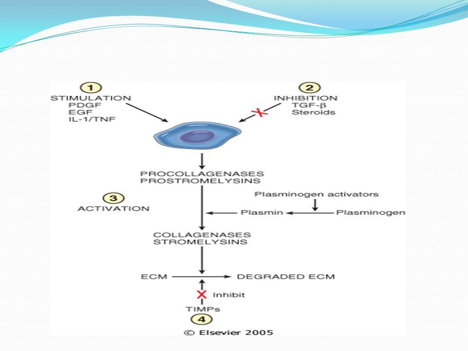 Zn dependent Matrix metalloproteinase regulation