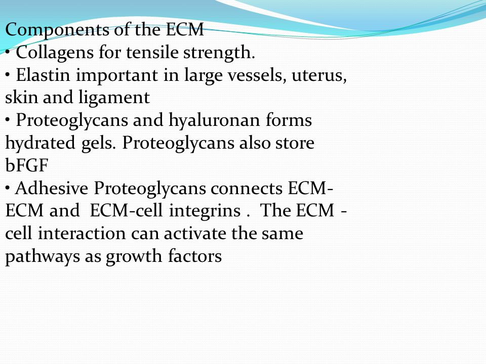 Components of the ECM • Collagens for tensile strength. • Elastin important in large vessels, uterus, skin and ligament.