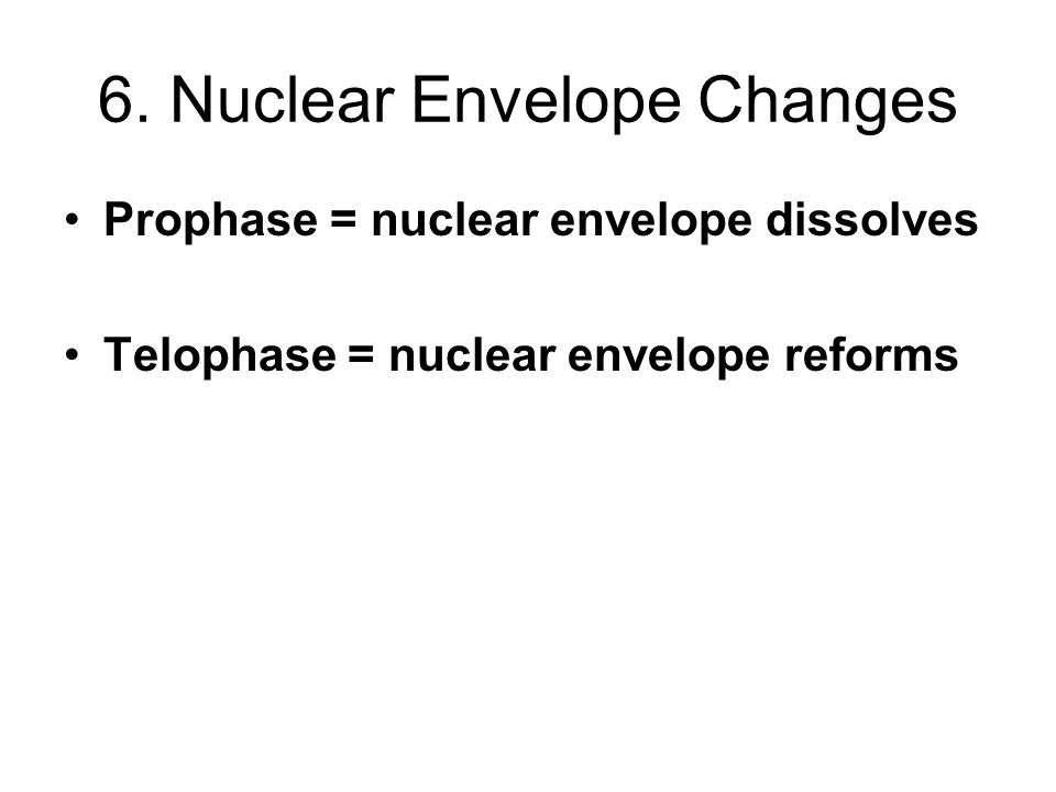6. Nuclear Envelope Changes