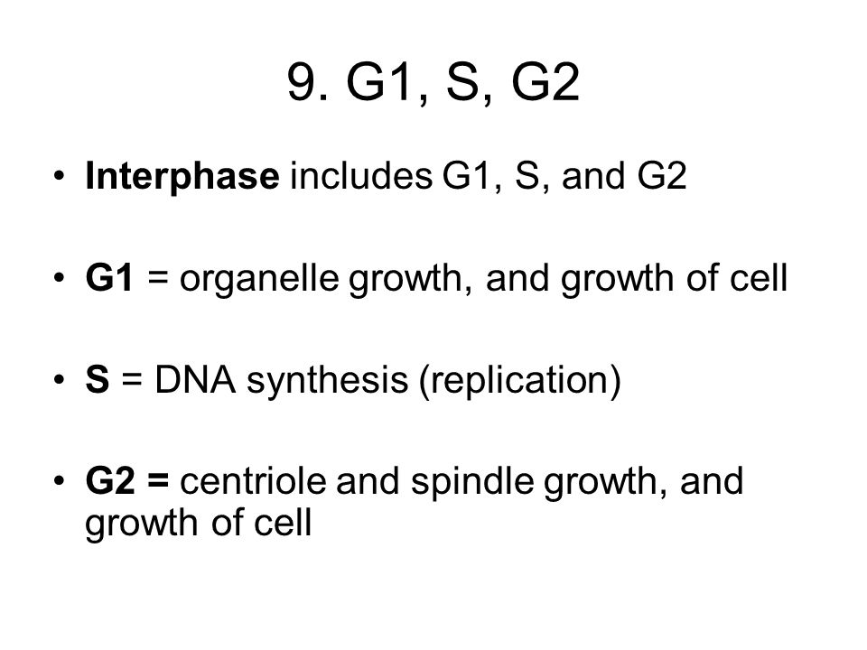 9. G1, S, G2 Interphase includes G1, S, and G2
