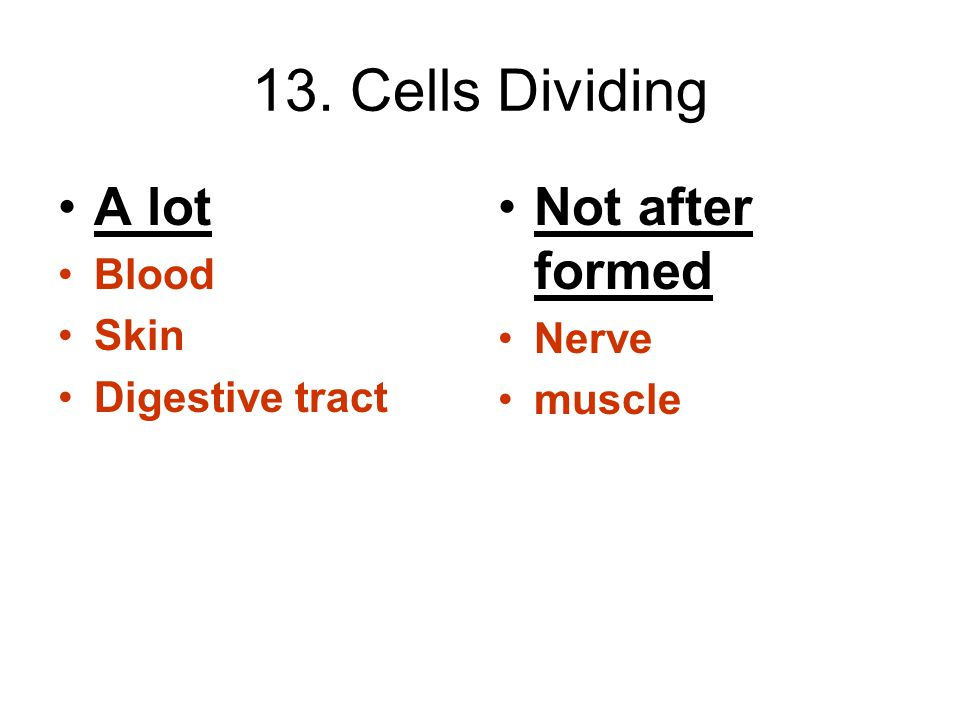 13. Cells Dividing A lot Not after formed Blood Skin Nerve