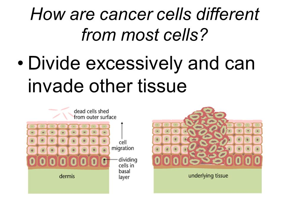 How are cancer cells different from most cells