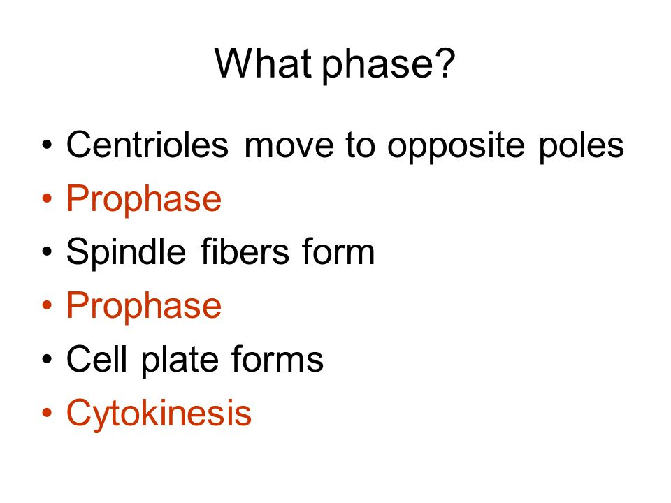What phase Centrioles move to opposite poles Prophase