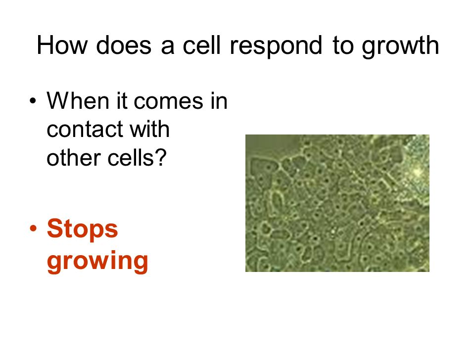 How does a cell respond to growth