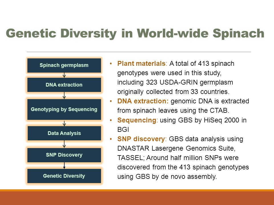 Genetic Diversity in World-wide Spinach