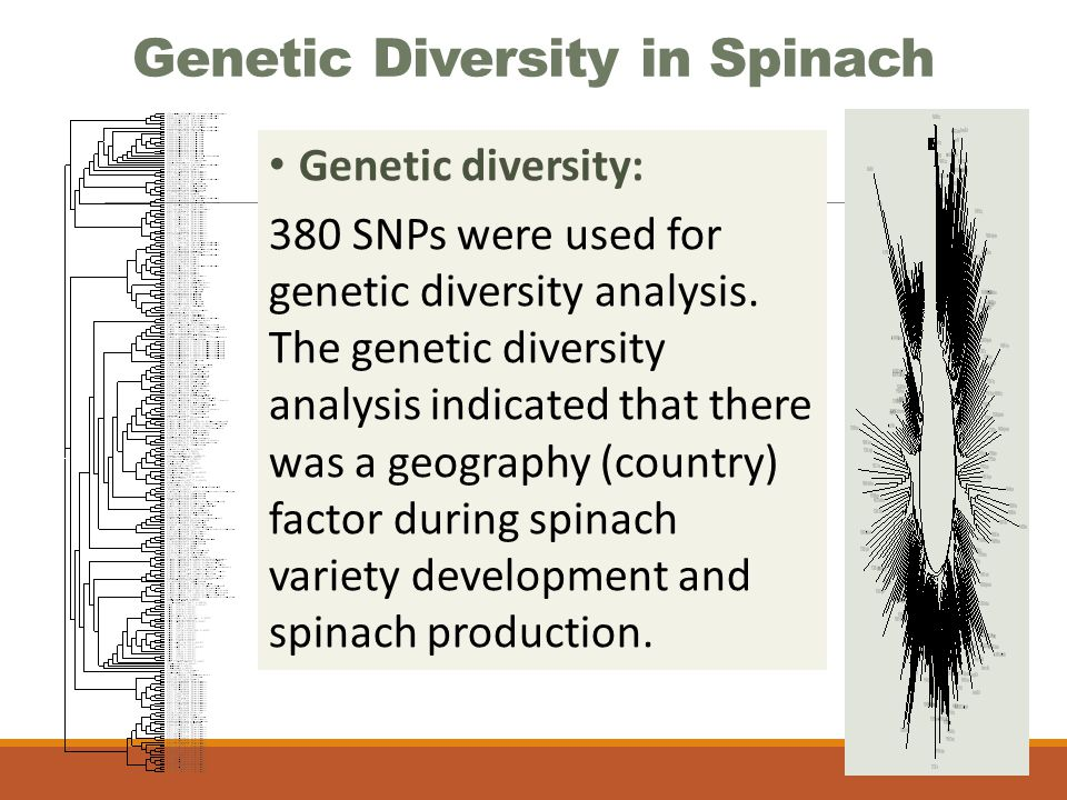 Genetic Diversity in Spinach