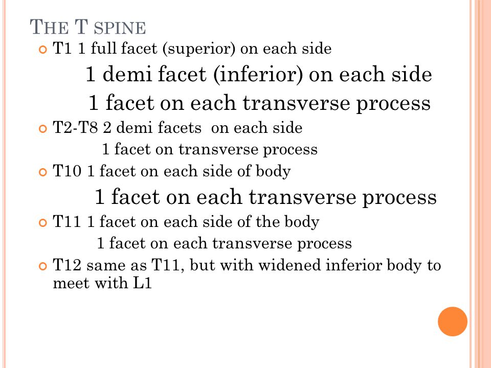1 demi facet (inferior) on each side