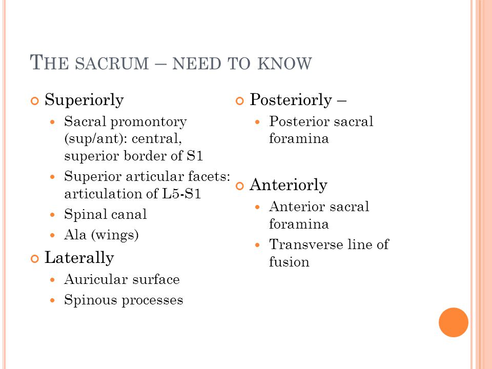 The sacrum – need to know