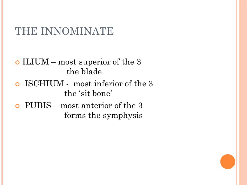 THE INNOMINATE ILIUM – most superior of the 3 the blade