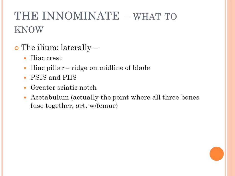 THE INNOMINATE – what to know