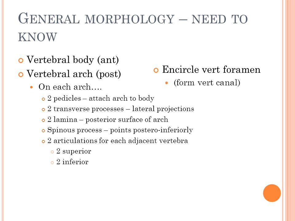 General morphology – need to know