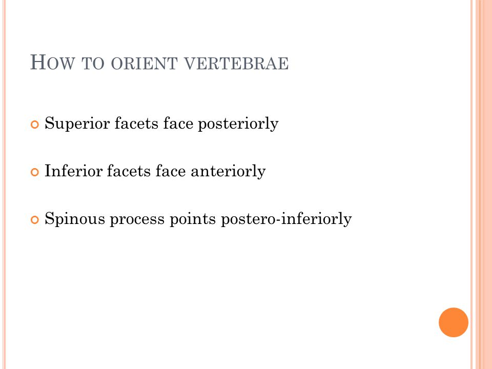 How to orient vertebrae