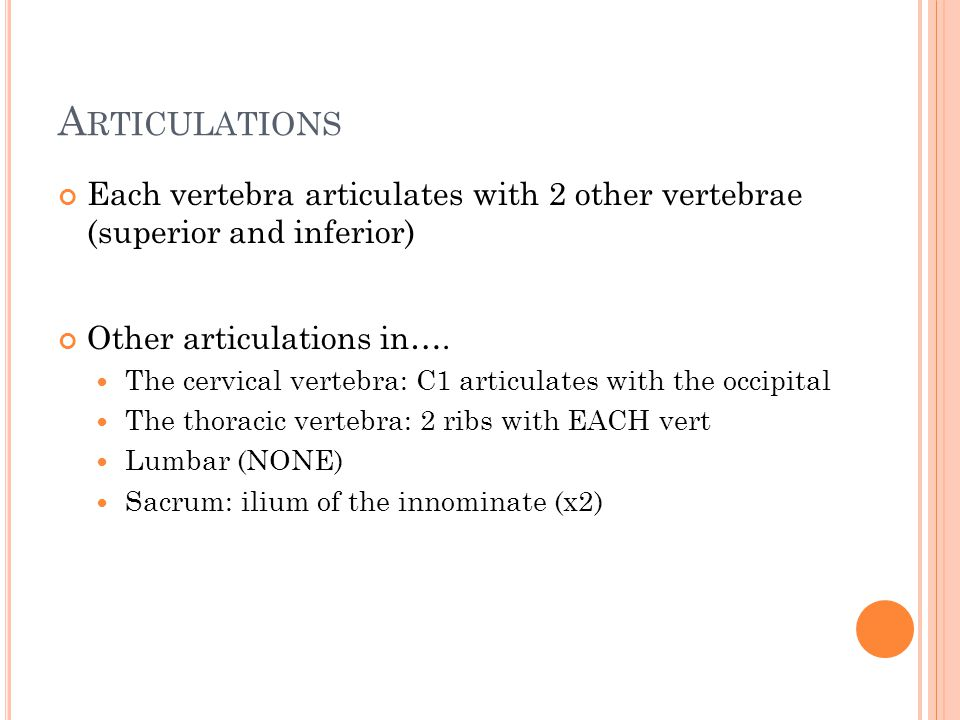 Articulations Each vertebra articulates with 2 other vertebrae (superior and inferior) Other articulations in….