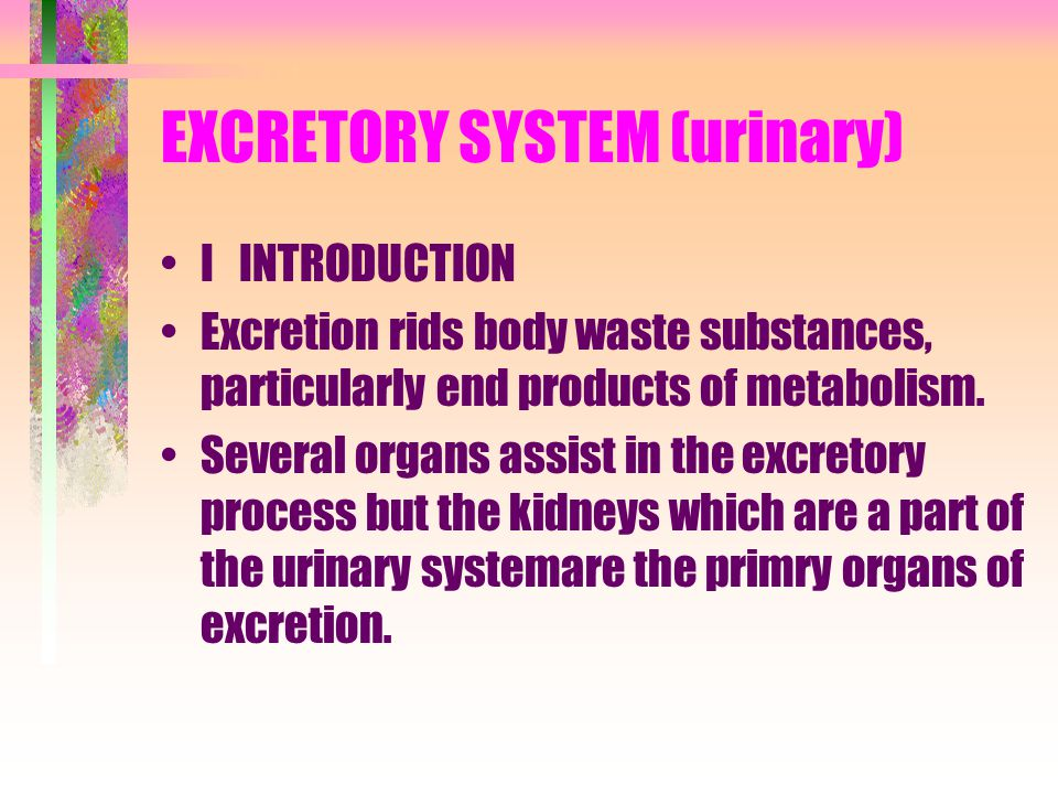 EXCRETORY SYSTEM (urinary)