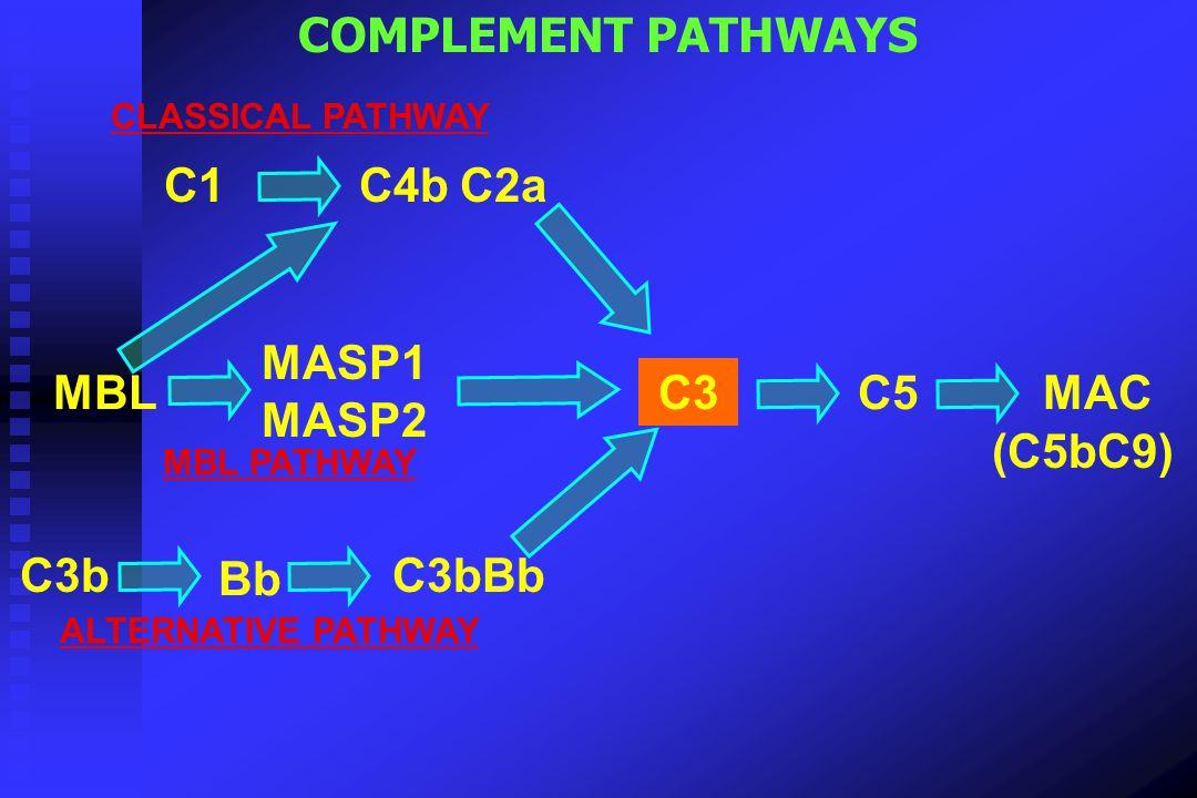 COMPLEMENT PATHWAYS C1 C4b C2a MASP1 MASP2 MBL C3 C5 MAC (C5bC9) C3b