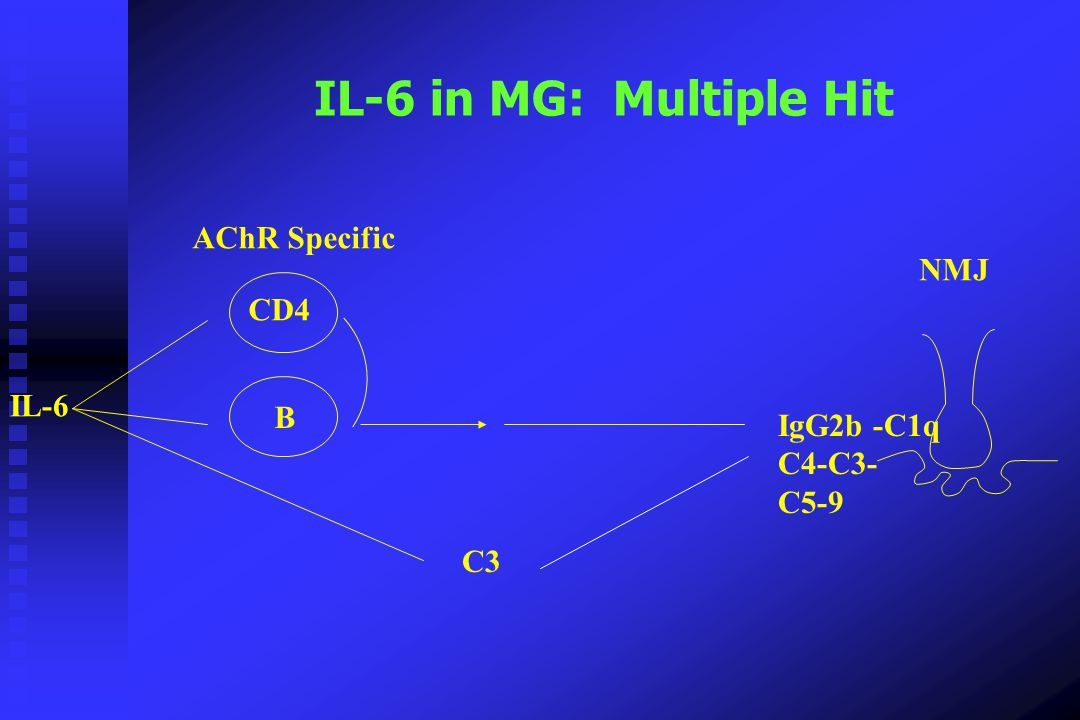 IL-6 in MG: Multiple Hit AChR Specific NMJ CD4 IL-6 B IgG2b -C1q