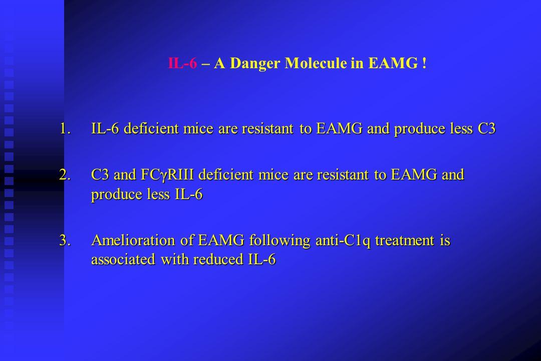 IL-6 – A Danger Molecule in EAMG !