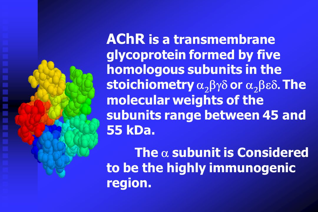 AChR is a transmembrane glycoprotein formed by five homologous subunits in the stoichiometry a2bgd or a2bed. The molecular weights of the subunits range between 45 and 55 kDa.