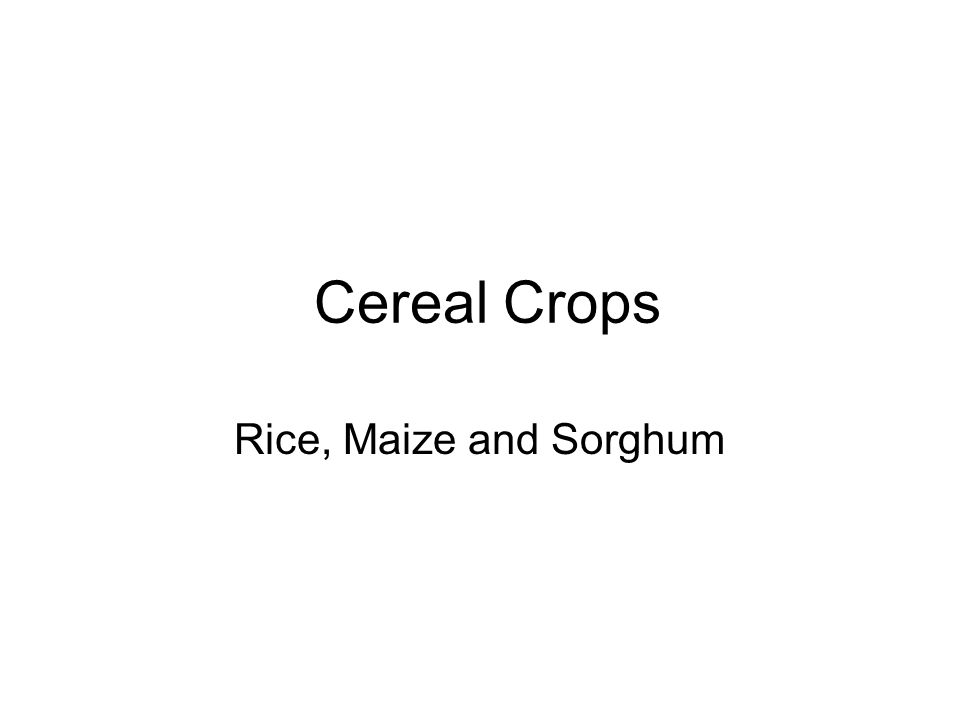 Cereal Crops Rice, Maize and Sorghum