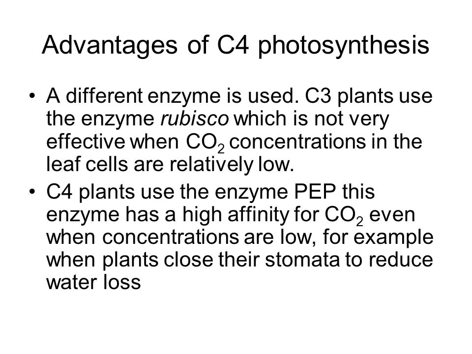 Advantages of C4 photosynthesis