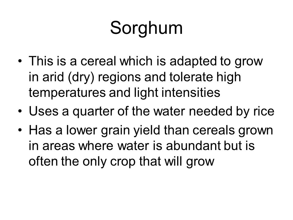 Sorghum This is a cereal which is adapted to grow in arid (dry) regions and tolerate high temperatures and light intensities.