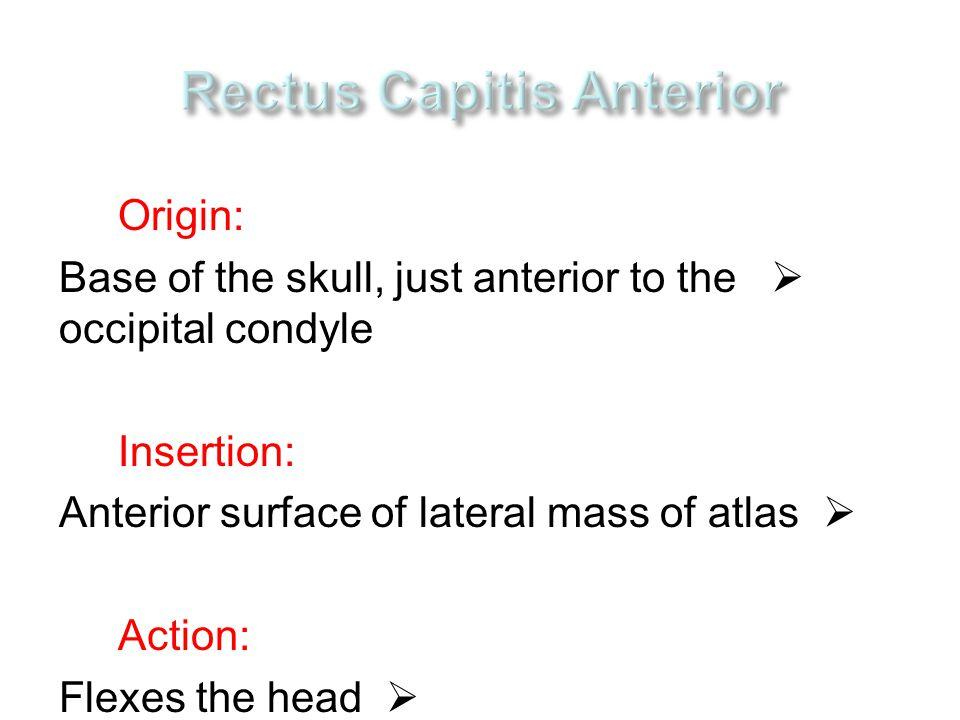 Rectus Capitis Anterior
