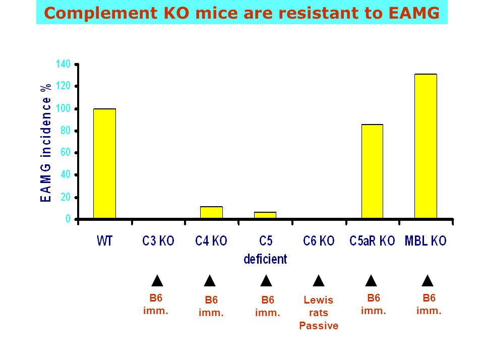 Complement KO mice are resistant to EAMG