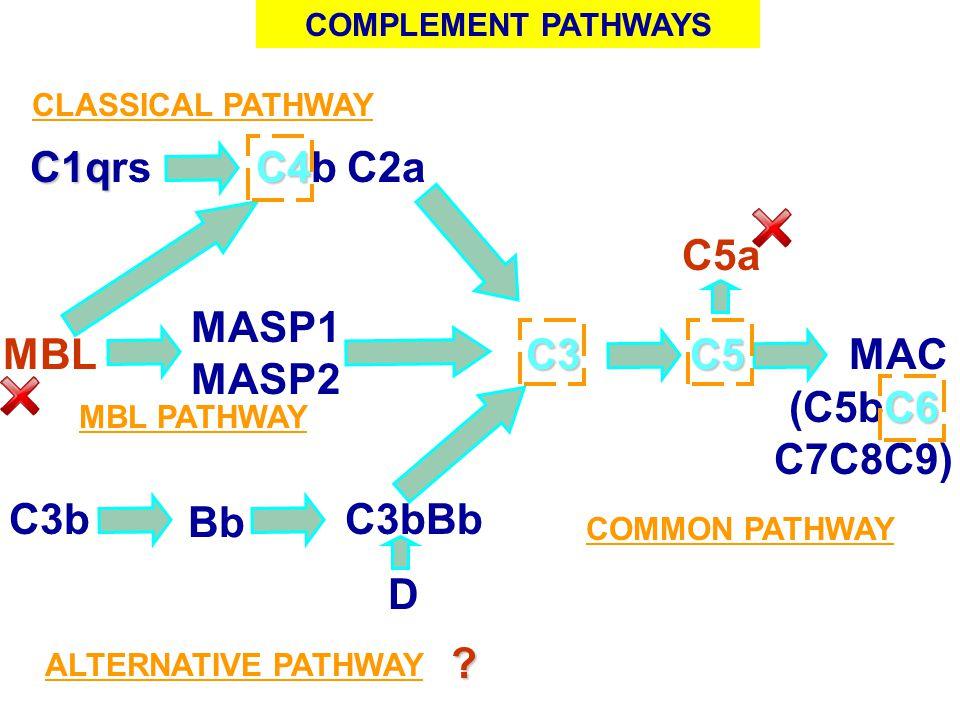 C1qrs C4b C2a C5a MASP1 MASP2 MBL C3 C5 MAC (C5bC6 C7C8C9) C3b Bb