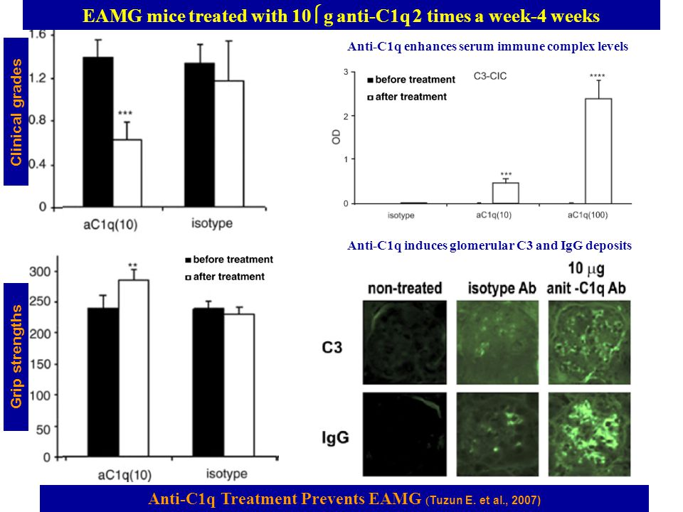 EAMG mice treated with 10μg anti-C1q 2 times a week-4 weeks