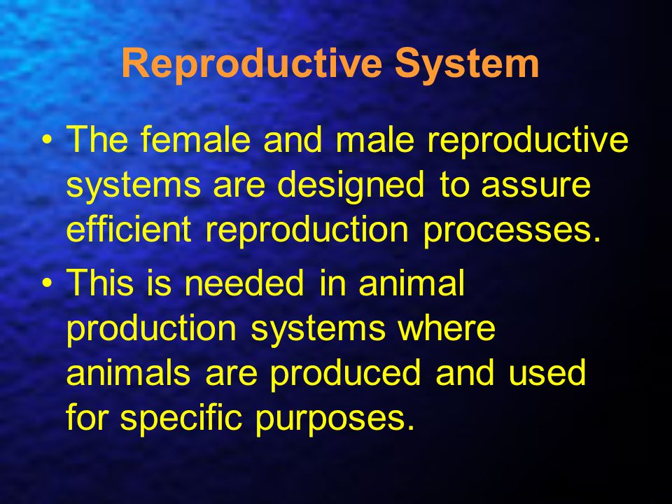 Reproductive System The female and male reproductive systems are designed to assure efficient reproduction processes.