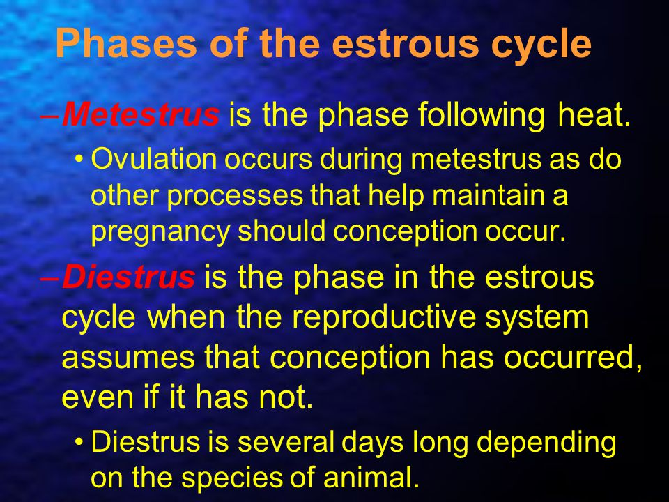 Phases of the estrous cycle