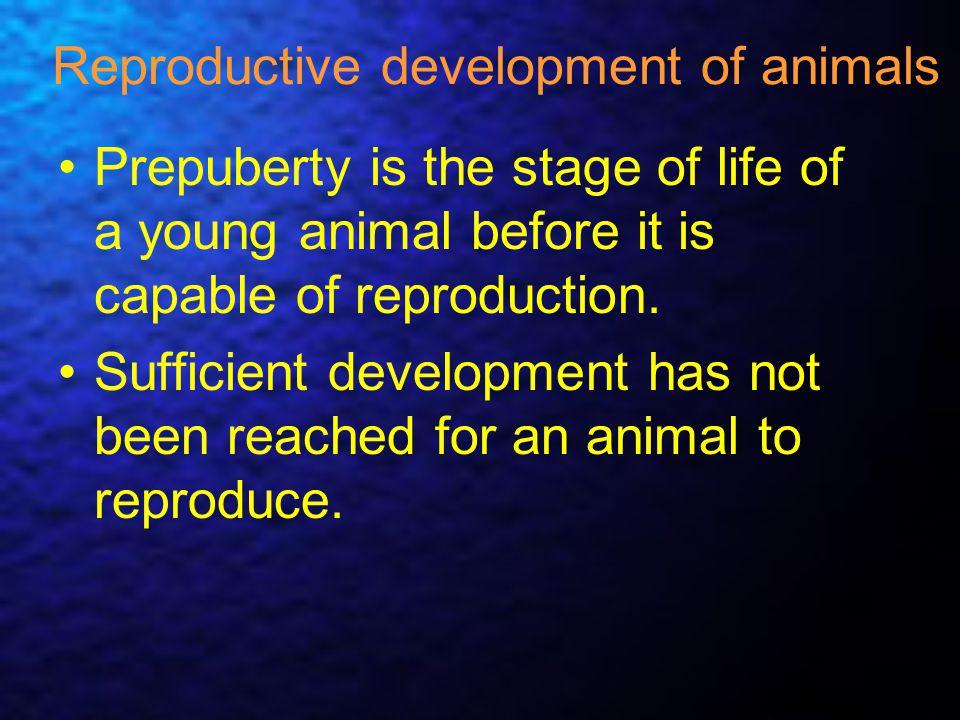 Reproductive development of animals