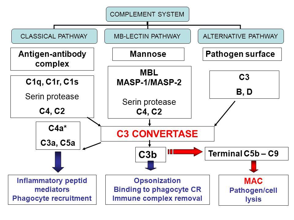 C3 CONVERTASE C3b Antigen-antibody complex Mannose Pathogen surface