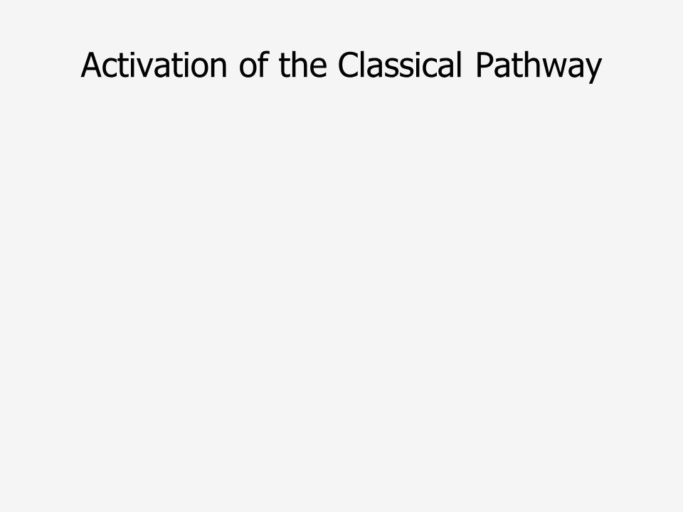 Activation of the Classical Pathway