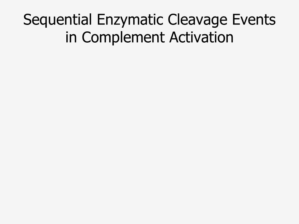 Sequential Enzymatic Cleavage Events in Complement Activation